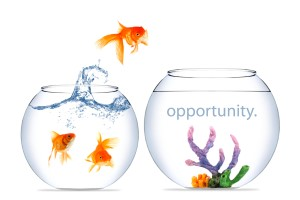 opportunity.fish jumping bowls