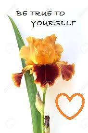 iris yellow red