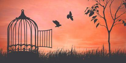 freedom bird cage