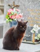 grave cat