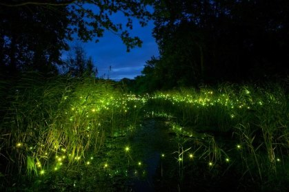 fireflies in grass