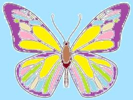 butterfly.3