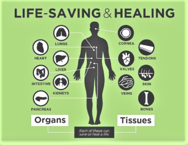 donate organs and healing