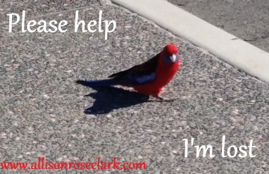 Please help Im lost_allisonroseclark