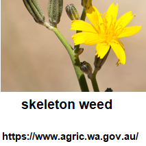 Skeleton-Weed-Group-sqLogo